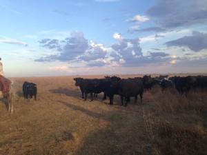 Blythe Angus Ranch