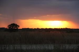 Sunset at Blythe Angus Ranch