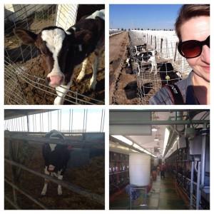 McCarty Family Farms