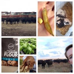 farm food tour pics