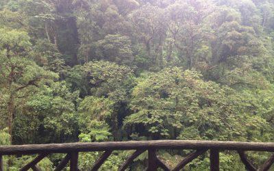 The Peace Lodge – Costa Rica