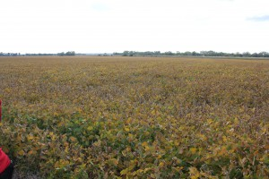 Sawyer's Soybean Field