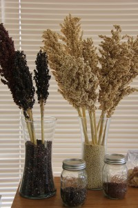 Black and Red Sorghum