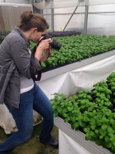 Me photographing some basil