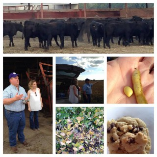 Sawyer Land and Cattle – Raising Steakhouse Quality Beef and Soybeans for Feed